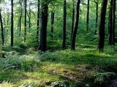 Forest on Pomerania, Poland