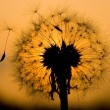 thumbnail of Dandelion in peaceful evening