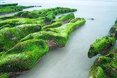 Green Rocky Seashore