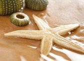 Stelle marine ed echinus sulla spiaggia