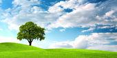 Oak tree on green field