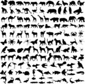 125 high quality different animals silhouettes - vector