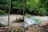 Rainforest Scenery