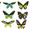 Some various butterflies isolated