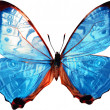 Color butterfly isolated