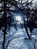 Winter sundown in forest image.