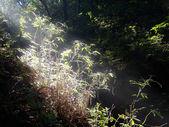 Ranní osvětlení lesem