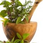 thumbnail of Herbs