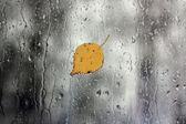 Déšť na okno listy