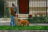 Hund-Wanderer
