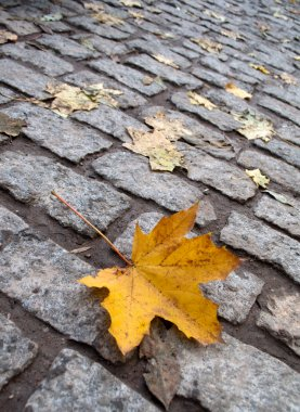 Yellow leaf on the autumn cobblestone