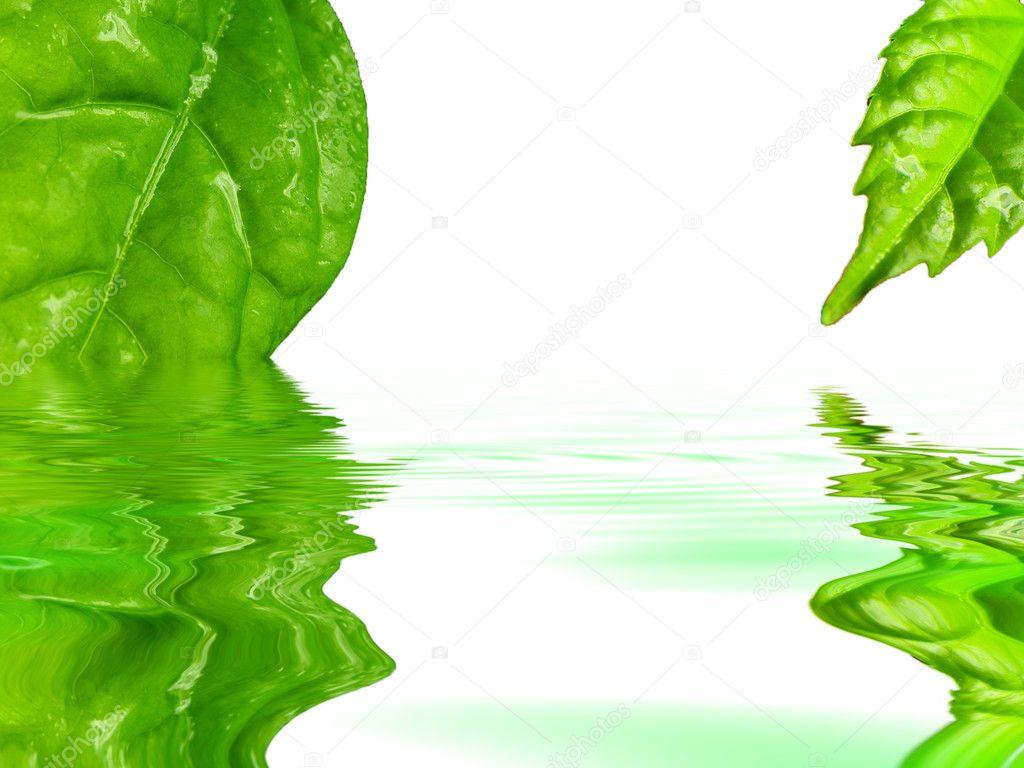 hojas de color verde que refleja en el agua — Fotos de Stock © R ...