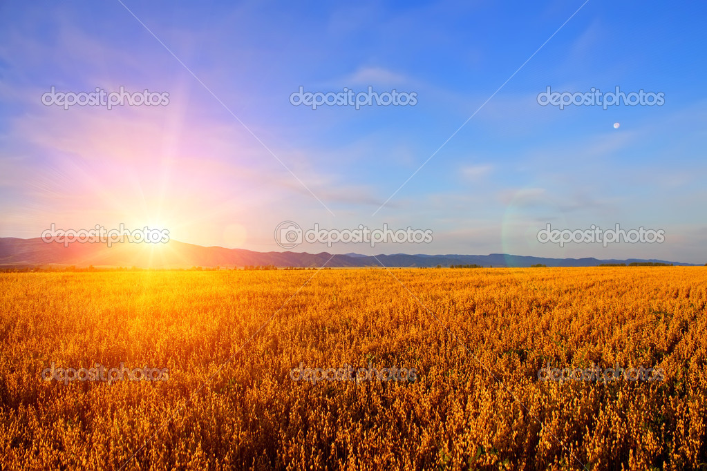 Sunrise in the field