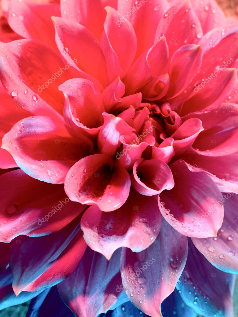 Beautiful lotus flower under the blue an