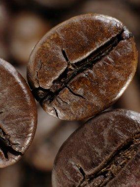 Coffee bean in deep shadows