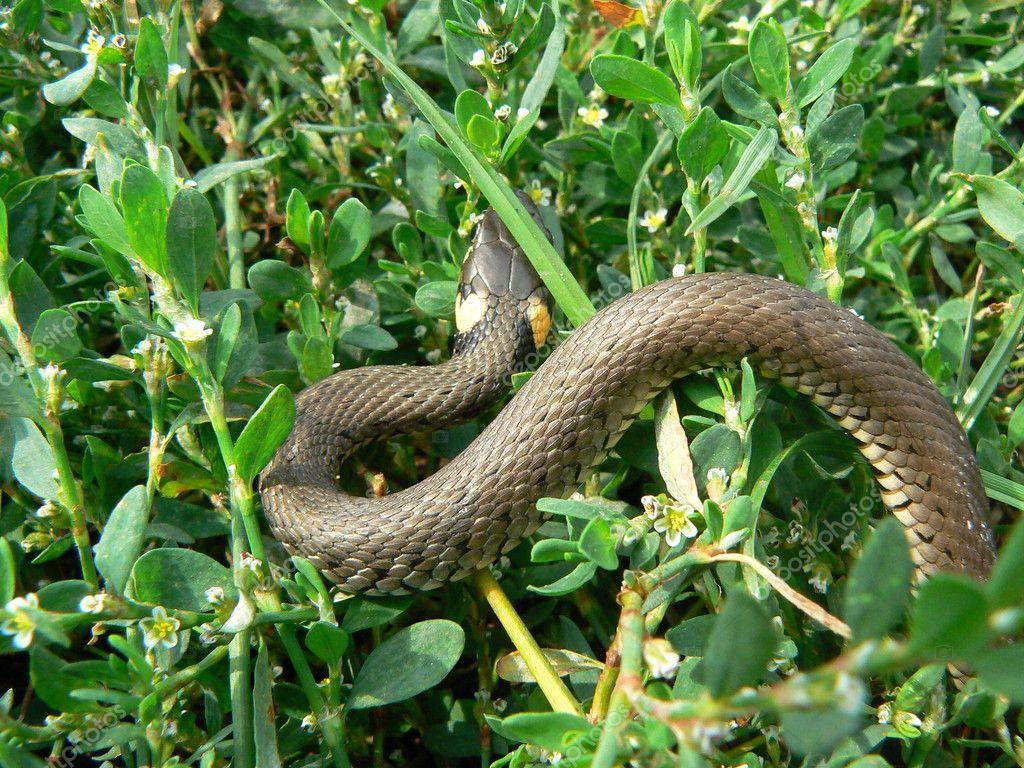 Little snake