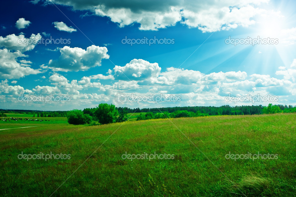 Green field with beauty blue sky and sun