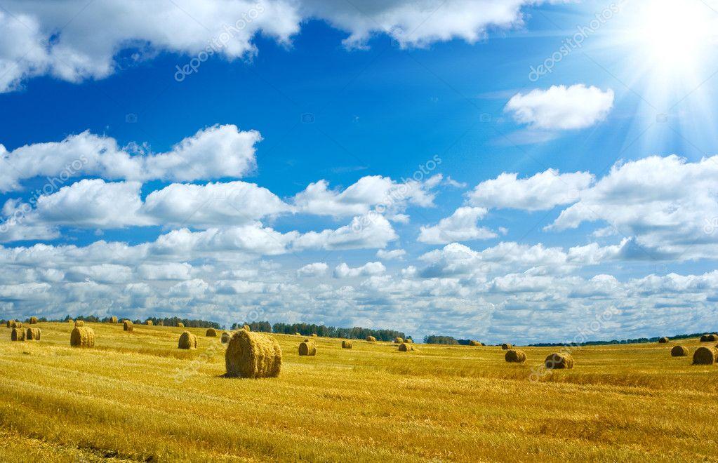 Harvesting field