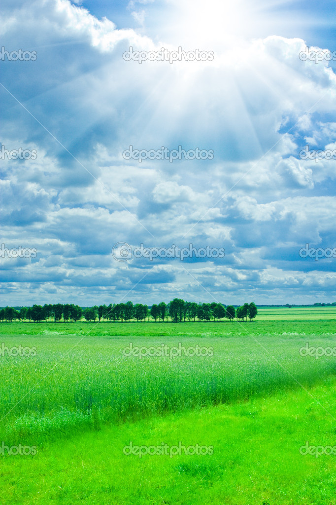 Landscape of wheat field and green meado