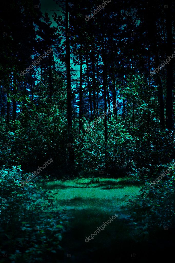 Night in a forest