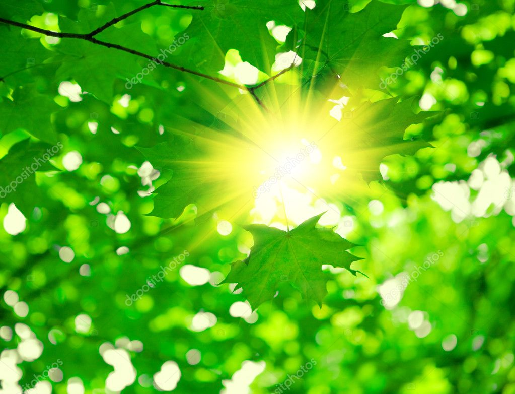 Green foliage with sun