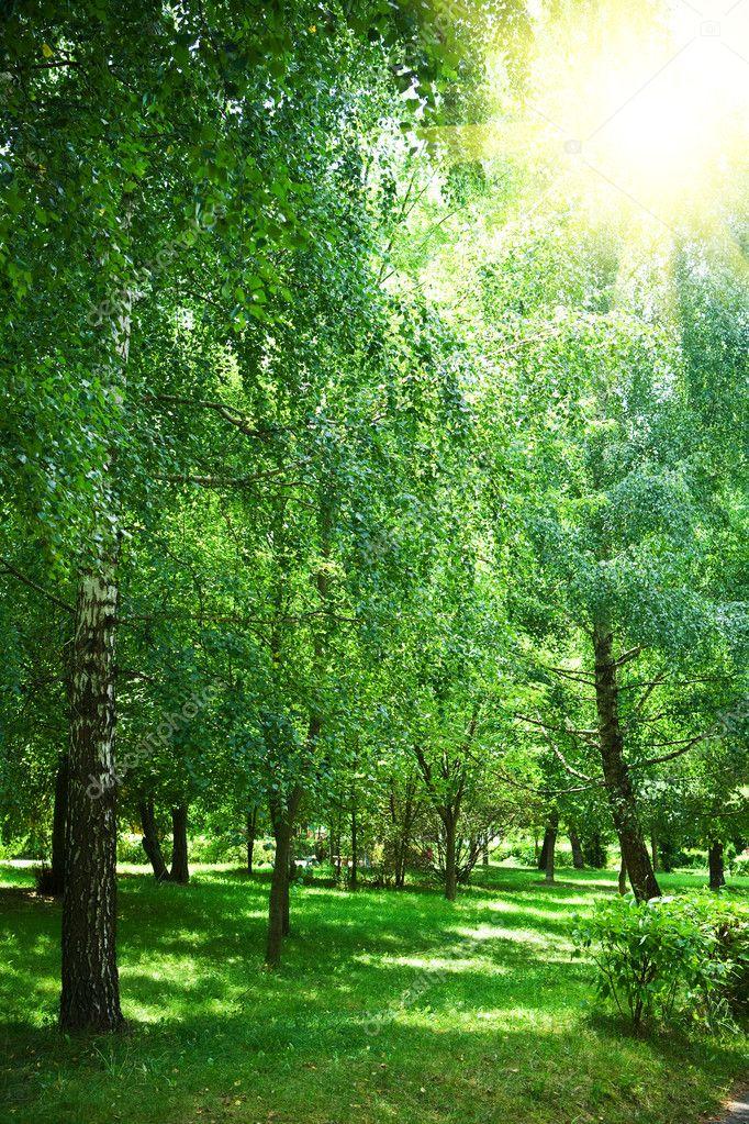 Green park with sun