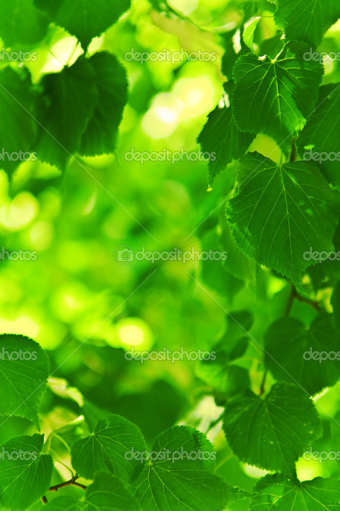 Background of green fresh foliage
