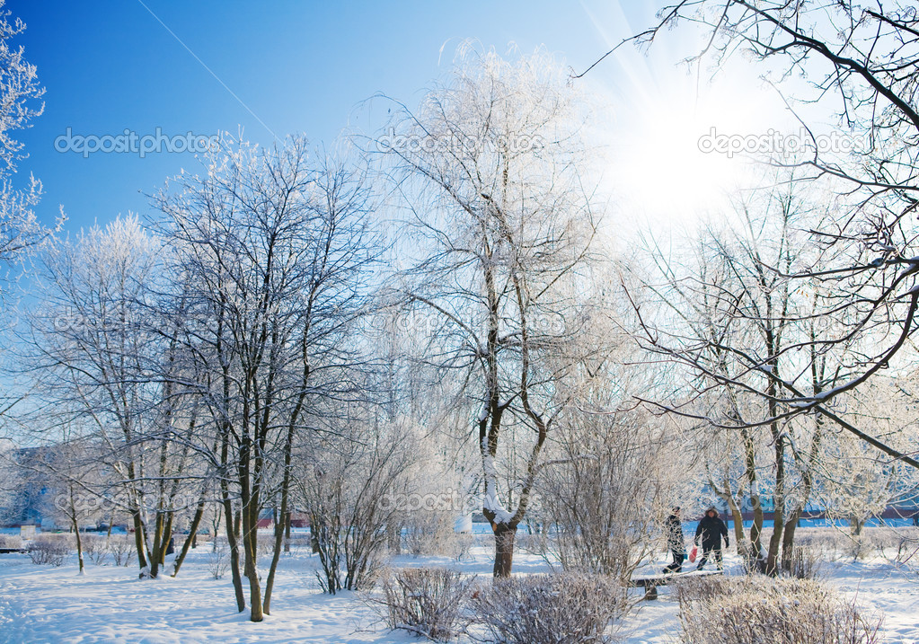 Frosty morning in park