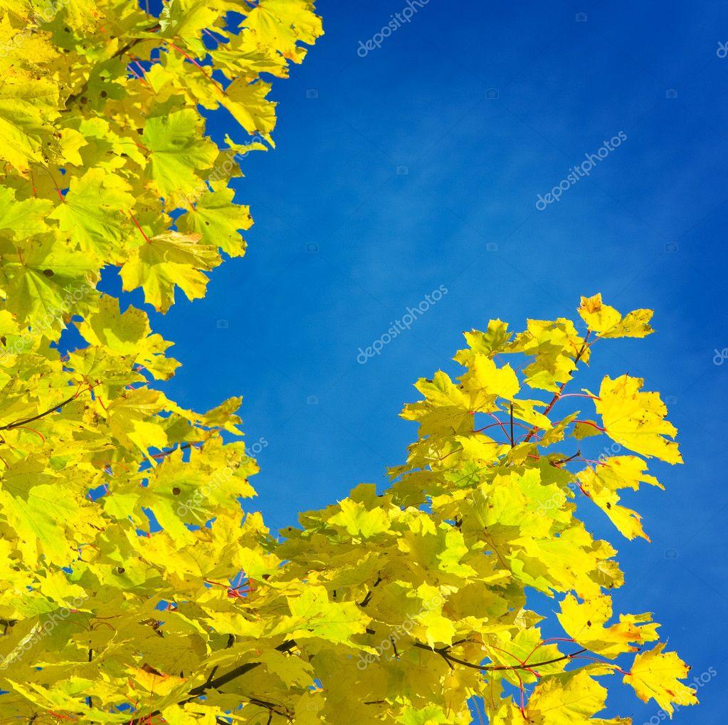 Yellow branch of autumn tree