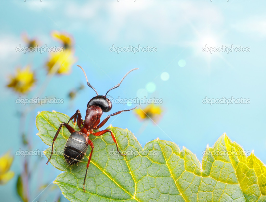 Garden ant catching sun beam