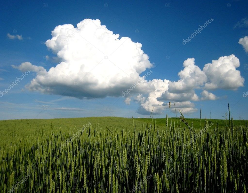 Green field and cloud