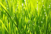 Fotografie kapky na trávě