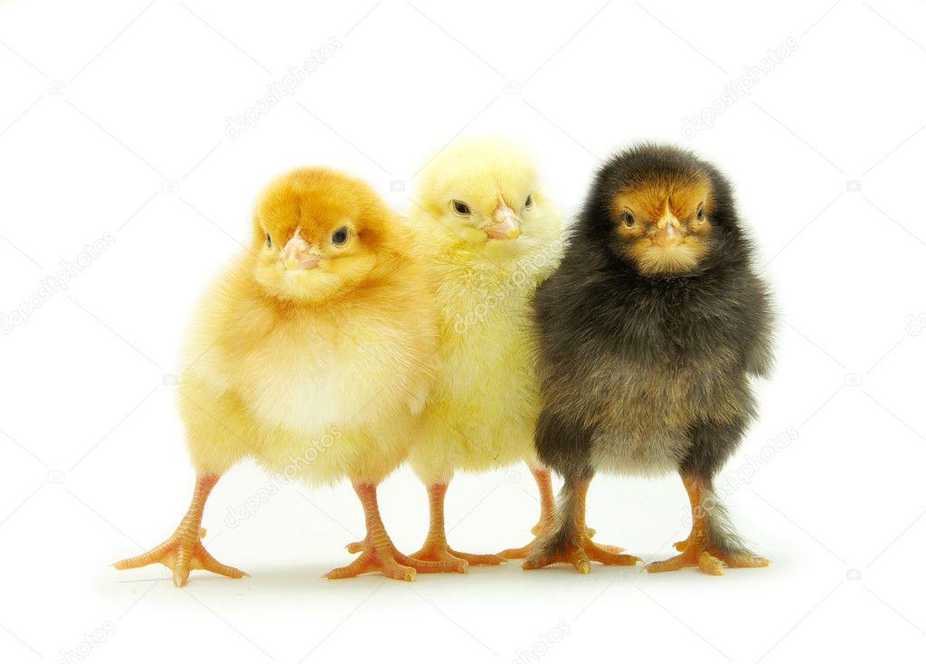 unga håriga kycklingar mamma och SIS Porr