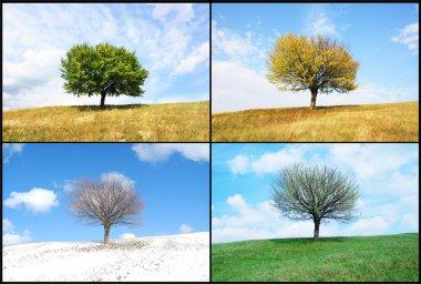 Alone tree in for season stock vector