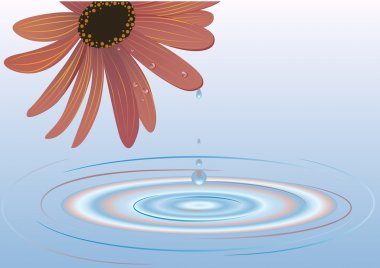 Flower of the water
