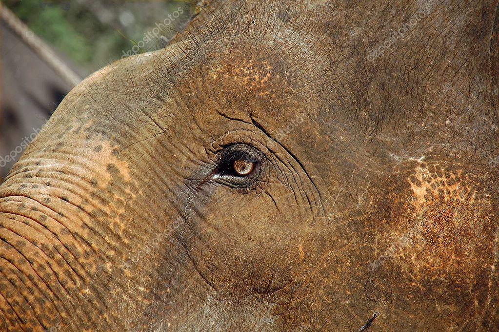 The Eye of the Baby Elephant