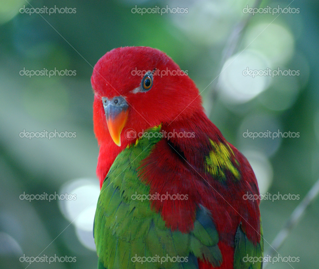 A bright parrot
