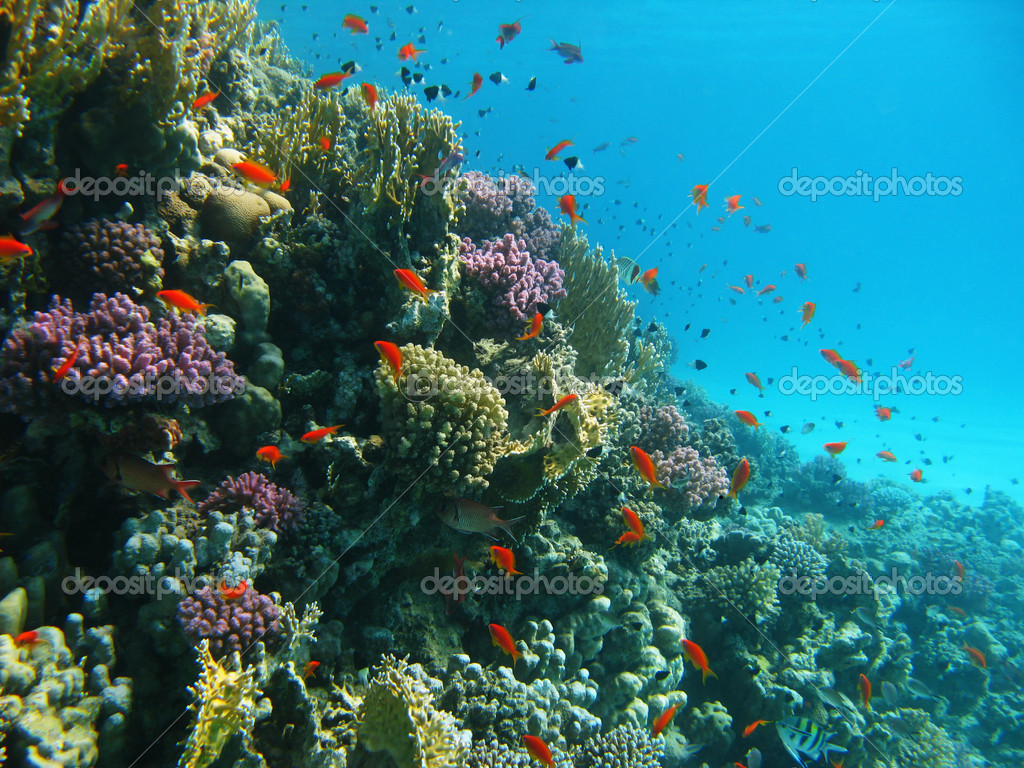 Coral reef and tropical fishes