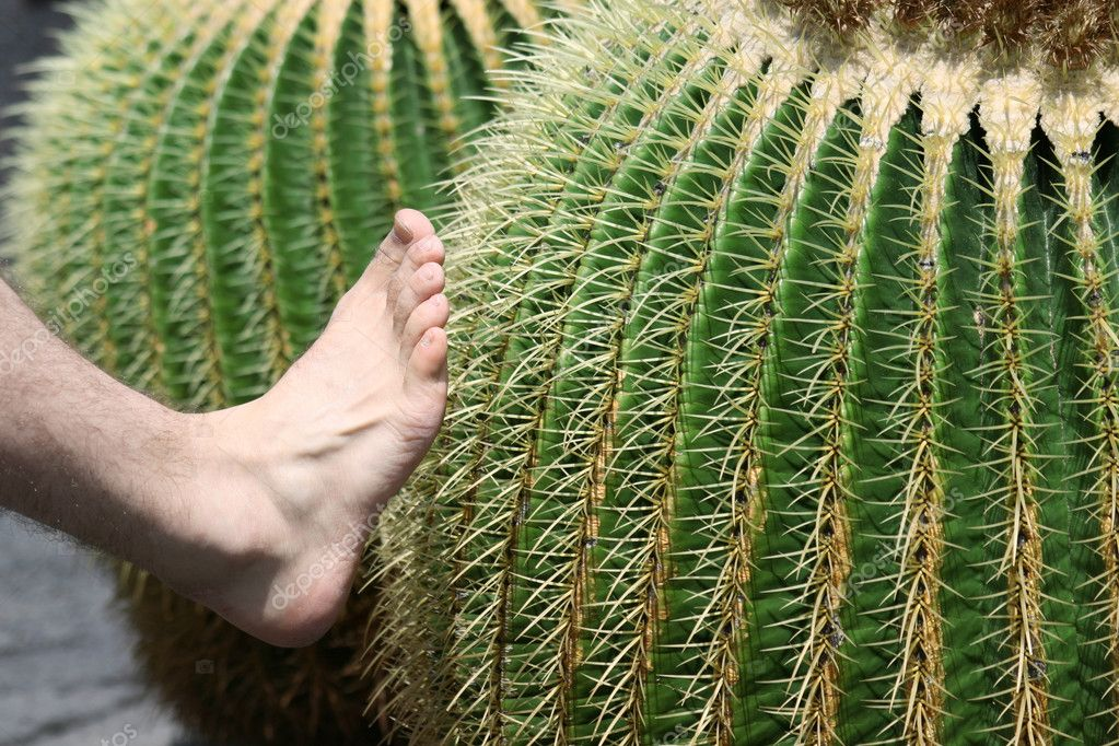 Touching The Cactus