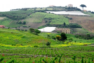 Classical view to rural area in Sicily