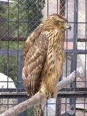 dravý pták