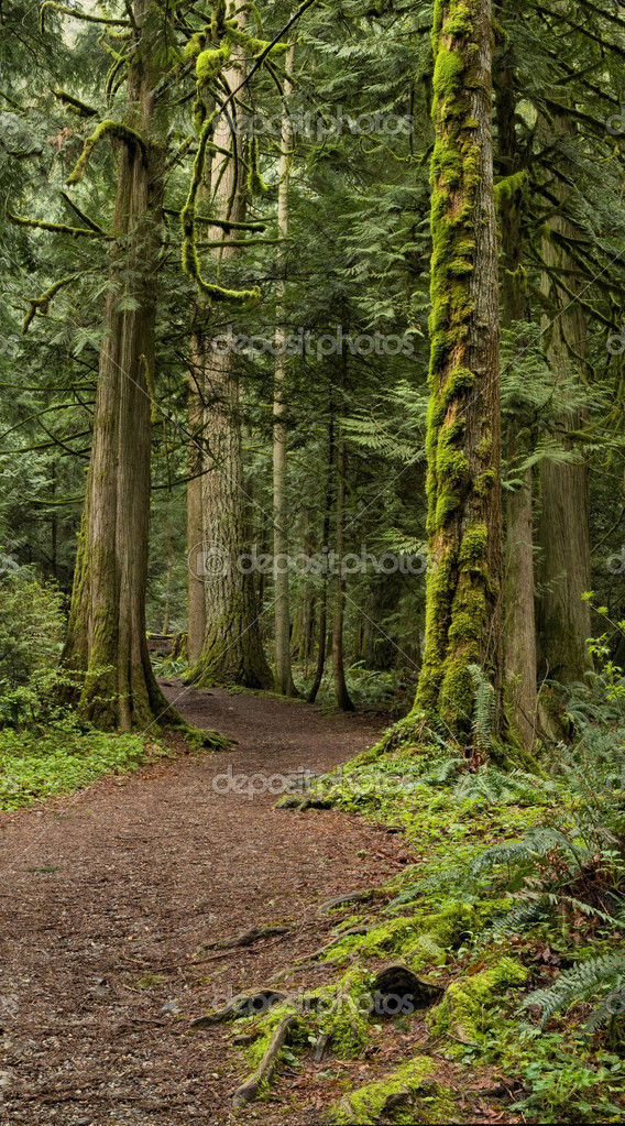 Pacific Northwest forest and trail