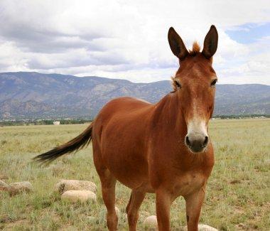 Horse in meadow in Colorado