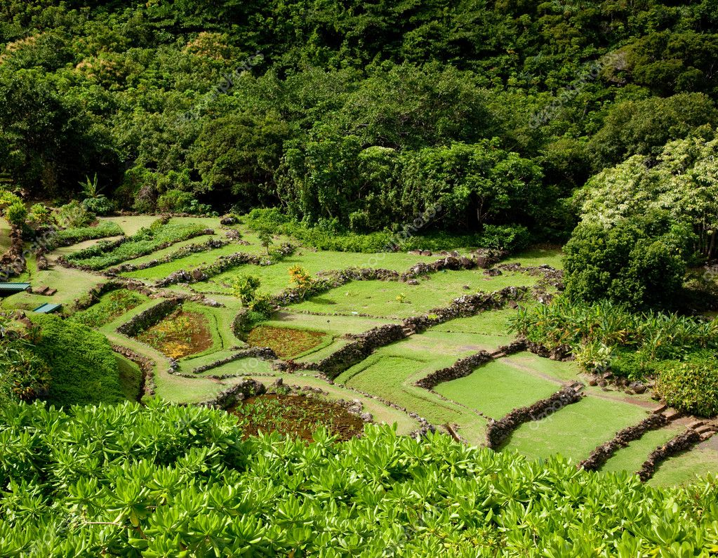 Terraced agriculture on Kauai