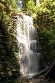 Berry creek falls stezka