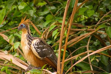 Stinky Bird