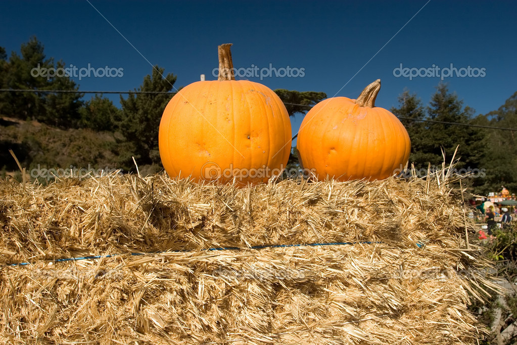 Agri-entertainment include: pick-your-own operations, pumpkin patches, corn mazes, farm stores, agricultural festivals, and educational activities. stock vector