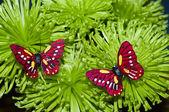 Fotografia due farfalle sui fiori