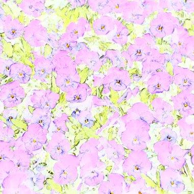 Soft pink violets