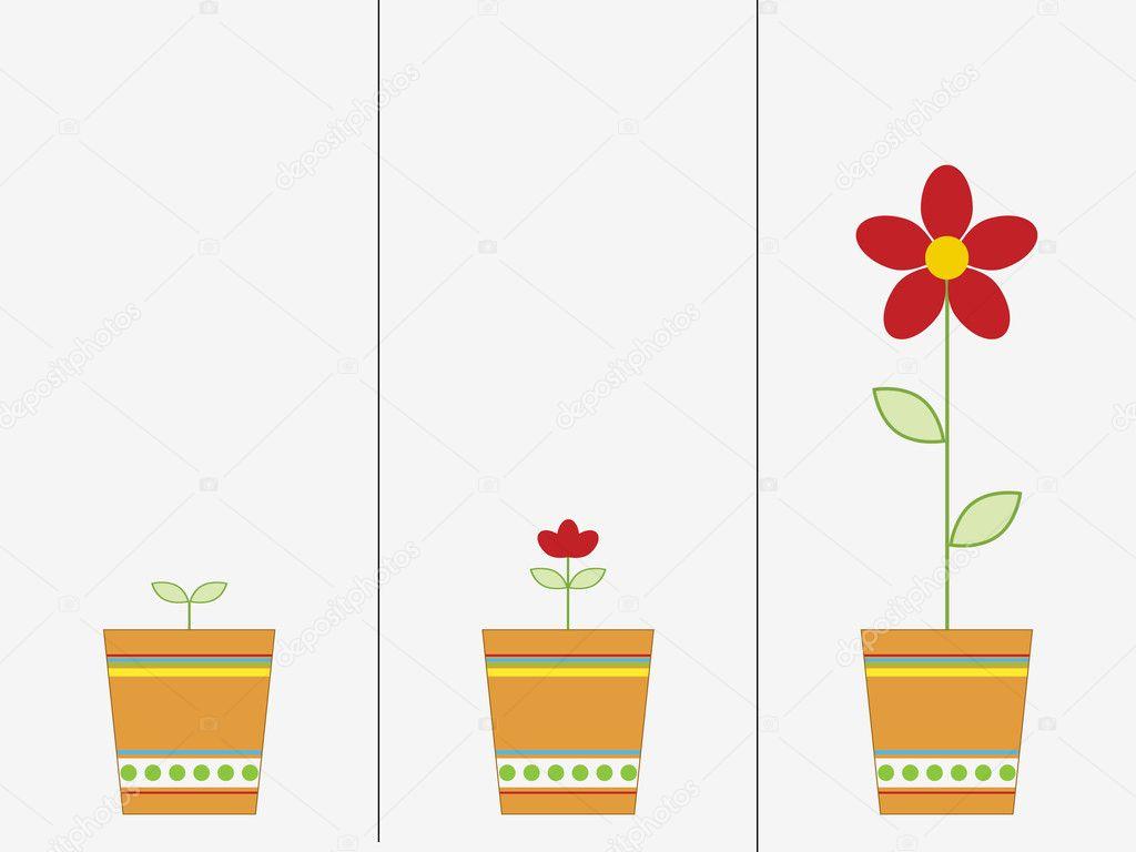 слушания картинки семя росток цветок с бутоном цветок раскрылся облипочку